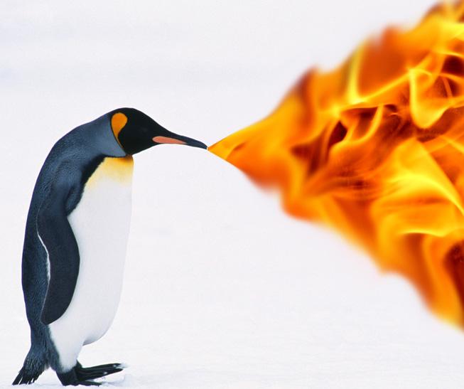 The Google Penguin Update