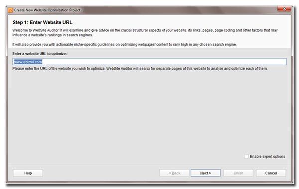 website auditor enter website URL
