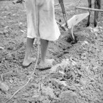 Sharecropper in Alabama, a plow girl. Near Eutaw, Alabama