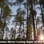 CRO tips to avoid losing sight of the forest for the trees!